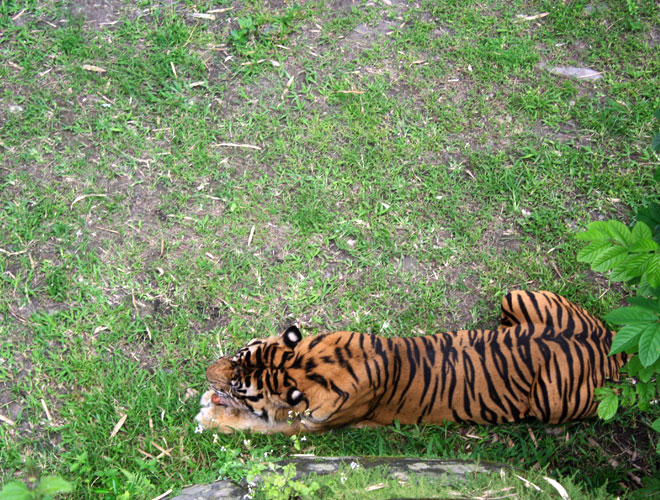 Gembiraloka Zoo