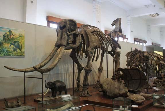 Wisata Bandung – Museum Geologi Bandung