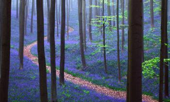 Lima Hutan Terindah di Dunia